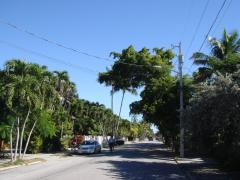 One of the nice roads in Key West. Actually not far from downtown.