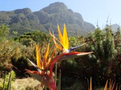 Kirstenbosch (Cape Town) – October 3, 2014