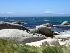 Boulders Beach (Simon's Town) – October 3, 2014