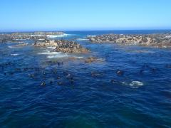 Shark Alley (Gansbaai) – October 5, 2014