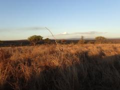 Mkhaya Game Reserve – October 18, 2014