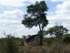 Kruger National Park – October 21, 2014