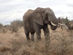 Kruger National Park – October 22, 2014